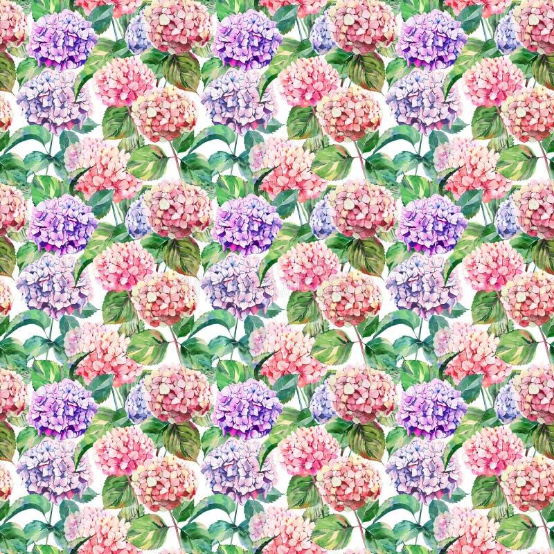 美好的明亮的典雅的秋天美妙的五颜六色的嫩柔和的桃红色草本花卉八仙花属开花 免版税库存图片