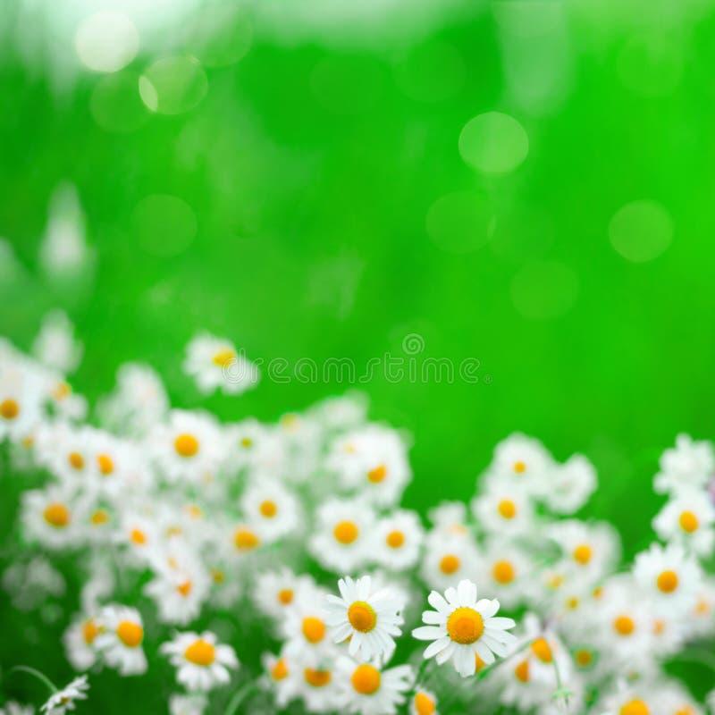 美好的明亮的自然夏天花卉背景 免版税库存照片