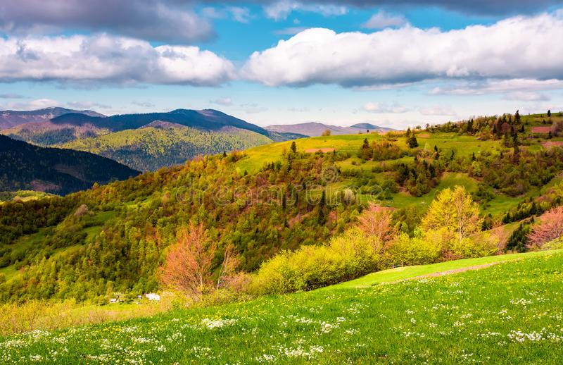 美好的春天的象草和树木丛生的小山 库存图片