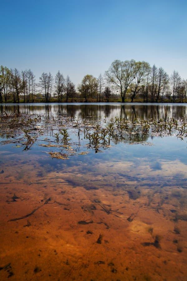 美好的春天风景 有光滑的清楚的水和含沙底部的池塘 树在水中被反射 库存照片