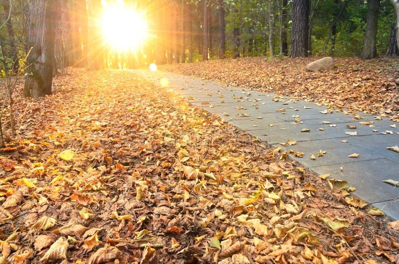 美好的晚上场面在有太阳的秋天公园发出光线 免版税库存图片