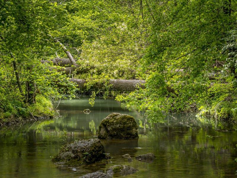 美好的普通自然小河背景,当树下落的和岩石 平安,田园诗 咬住了长满 免版税库存照片