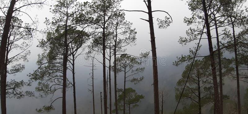 美好的有雾的早晨在夏天 库存照片