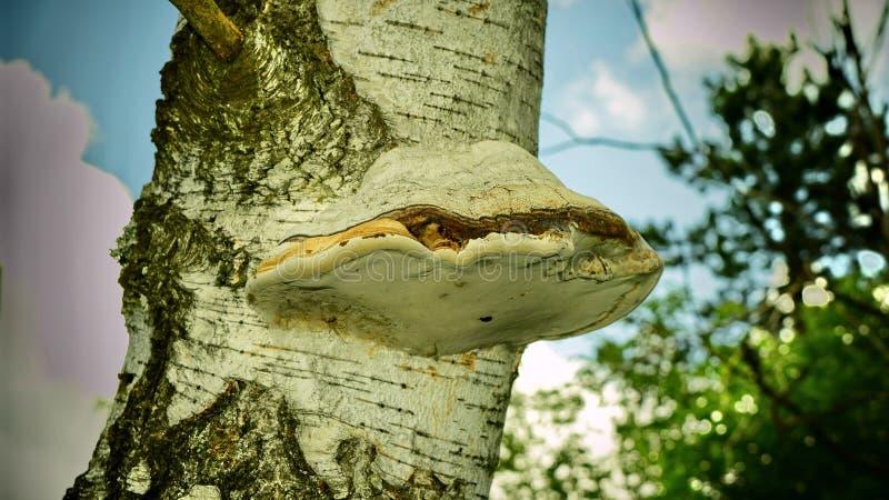 美好的本质 木头,蘑菇,自然奇迹  库存照片