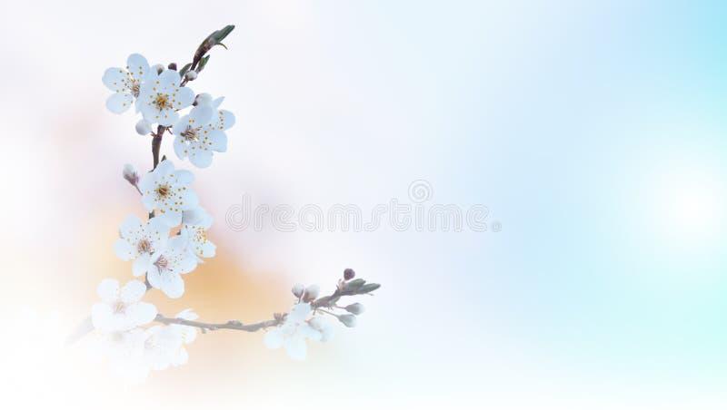 美好的本质 艺术摄影 幻想设计 创造性的春天背景 白色自然墙纸 复制空间 网横幅,树 库存图片