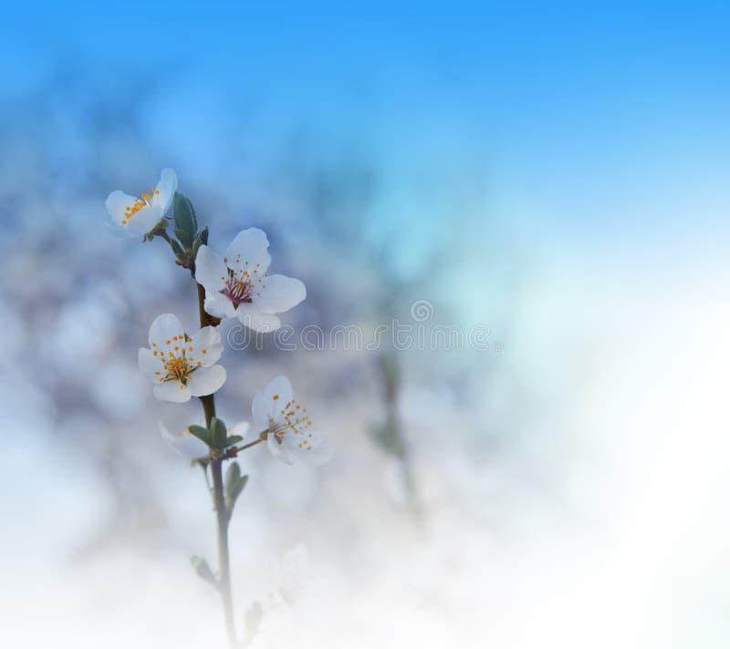 美好的本质 艺术摄影 幻想设计 创造性的春天背景 背景高雅重点邀请浪漫符号温暖的婚礼 蓝色自然墙纸 复制空间 免版税图库摄影