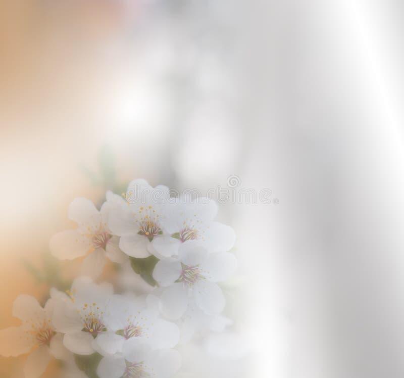美好的本质 艺术摄影 幻想设计 创造性的春天背景 背景高雅重点邀请浪漫符号温暖的婚礼 白色自然墙纸 复制空间 免版税库存图片