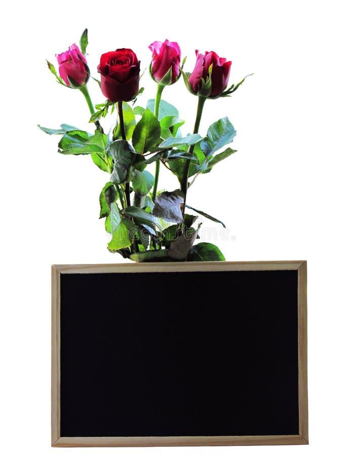 美好的束在白色背景隔绝的黑板后的玫瑰 免版税图库摄影