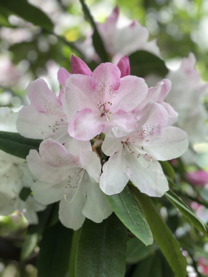 美好的束白花 库存照片