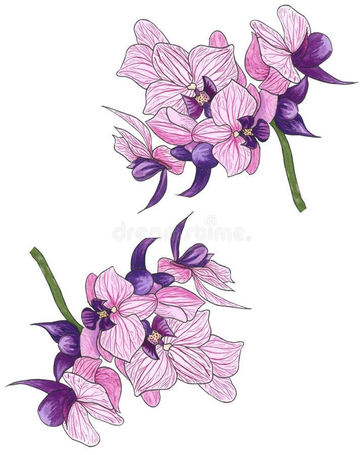 美好的查出的兰花粉红色白色 向量例证