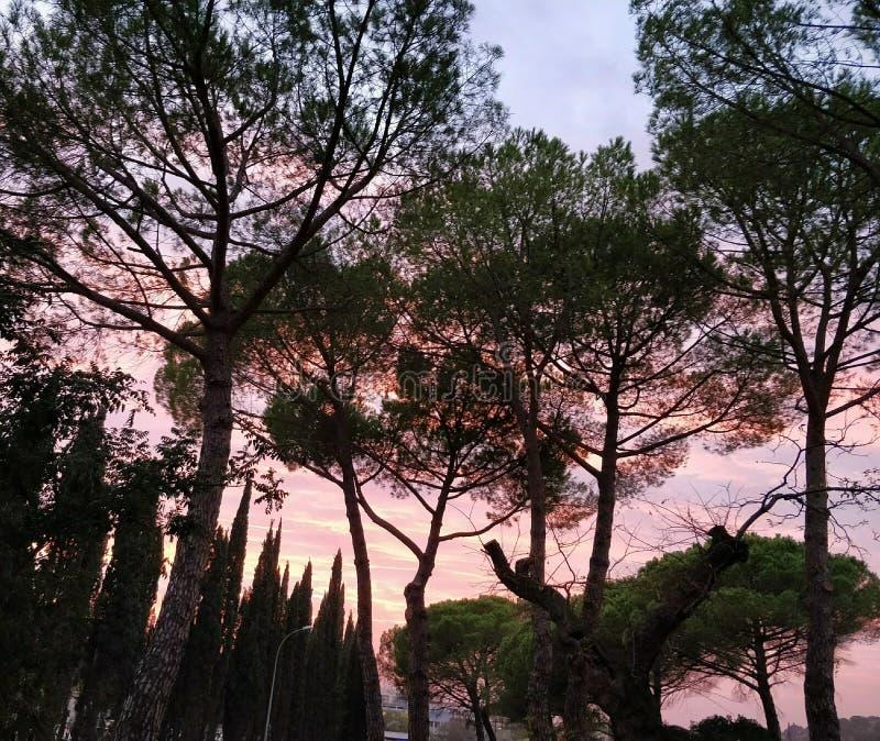美好的桃红色天空ðŸ'ž 免版税图库摄影