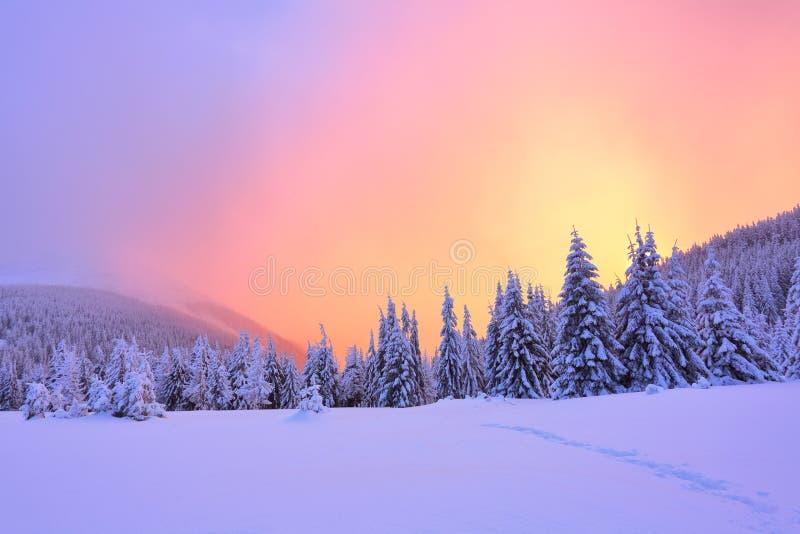 美好的桃红色日落亮光启迪与用雪盖的公平的树的美丽如画的风景 库存图片