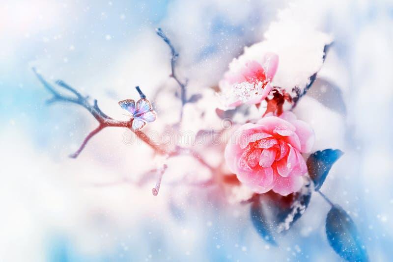 美好的桃红色玫瑰和蝴蝶在雪和霜在蓝色和桃红色背景 下雪 艺术性的冬天自然图象 皇族释放例证