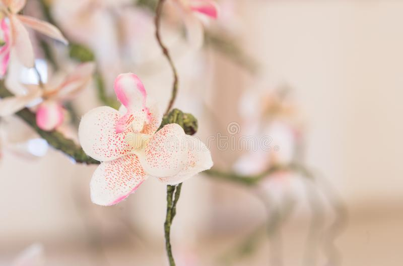 美好的桃红色花背景 库存照片