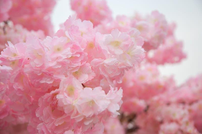 美好的桃红色花背景 免版税库存图片