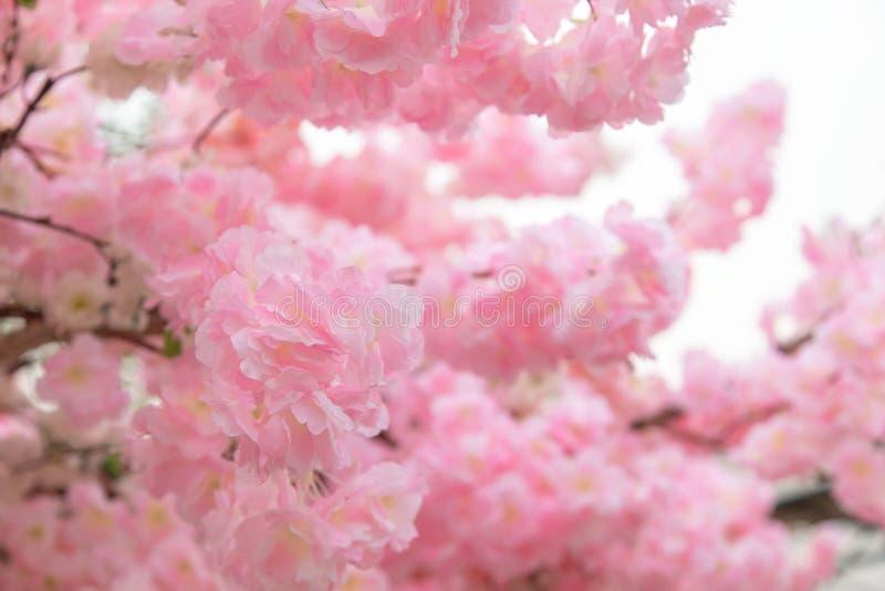 美好的桃红色花背景 图库摄影