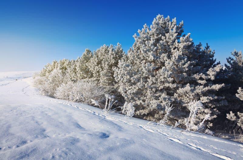 美好的森林冬天 免版税库存照片