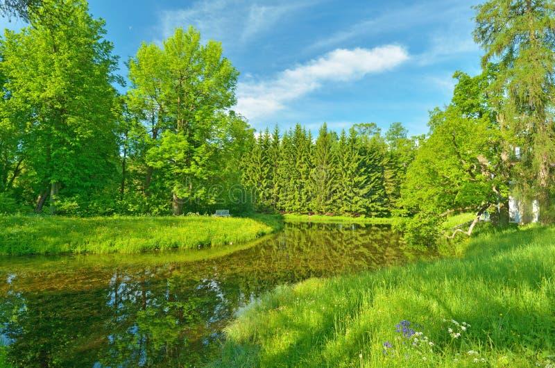 美好的森林横向 免版税库存图片
