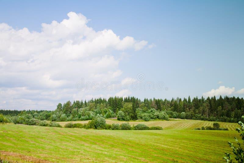 Download 美好的横向夏天 库存图片. 图片 包括有 问题的, 展望期, 夏天, 黄色, 照亮, 结构树, 本质, 阳光 - 15677147