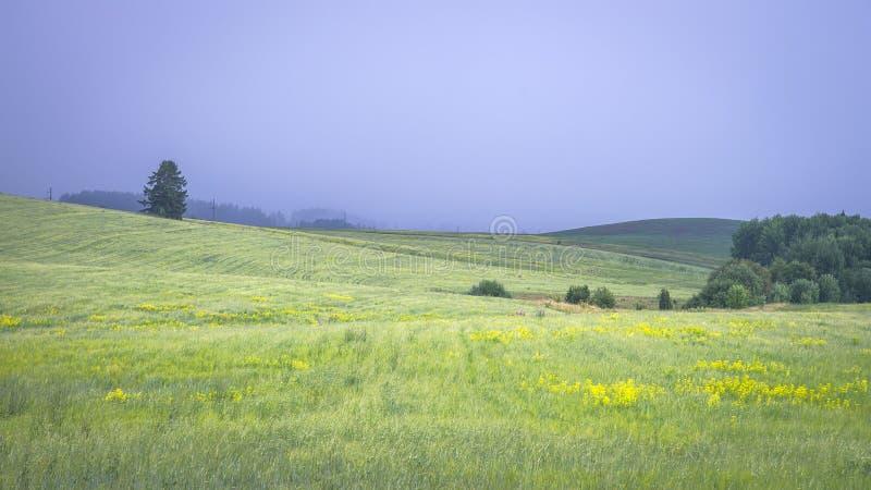 美好的横向 在蓝天的绿色夏天领域在雷暴前 库存照片