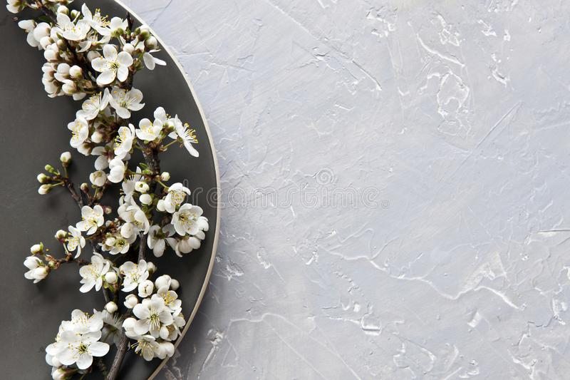 美好的樱桃树白色开花的花特写镜头照片  免版税库存照片