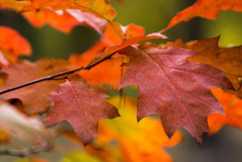 美好的橙黄红色秋叶背景 库存照片