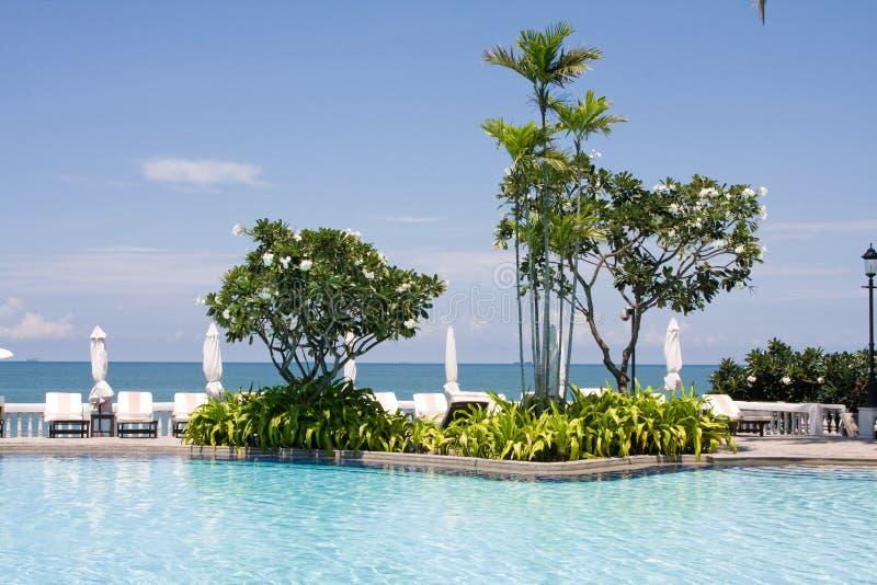 美好的池游泳热带的泰国 库存图片