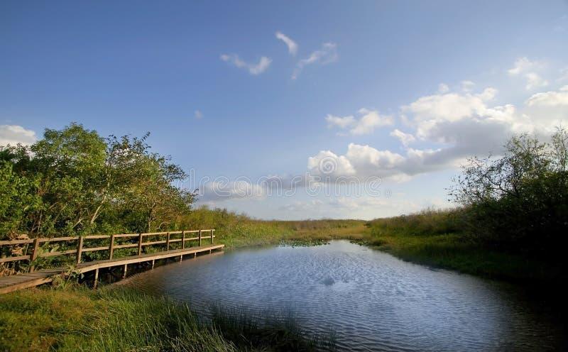 美好的沼泽地横向 库存照片