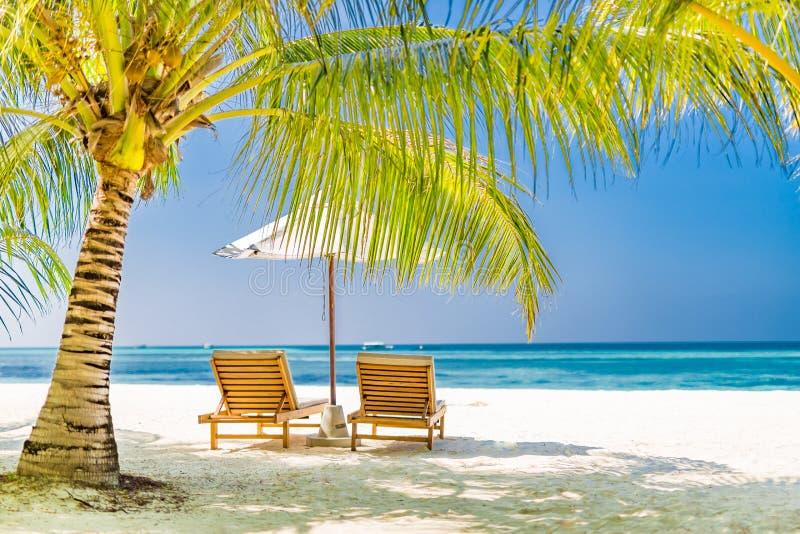 美好的海滩风景,两张太阳床在棕榈树下 豪华海滩场面 免版税库存图片