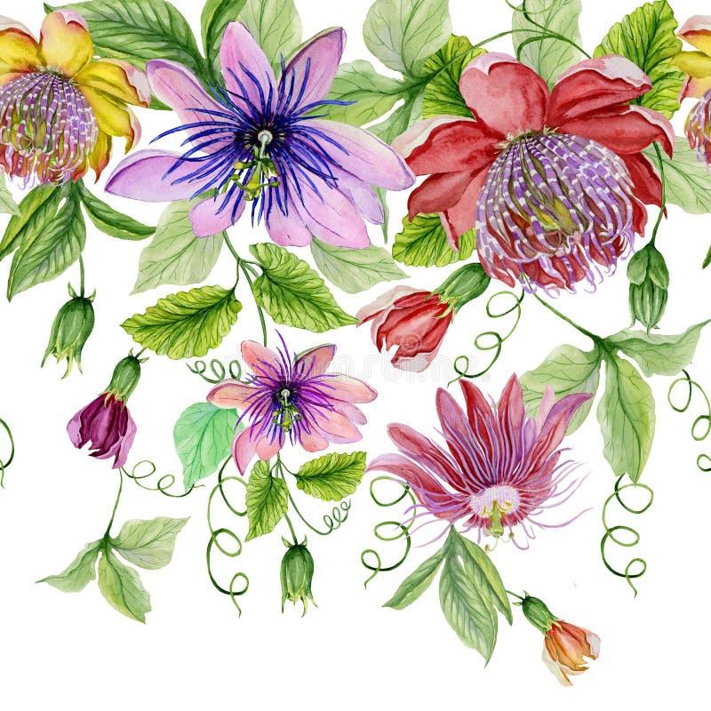 美好的激情开花与绿色叶子的西番莲在白色背景 无缝花卉的模式 多孔黏土更正高绘画photoshop非常质量扫描水彩 皇族释放例证
