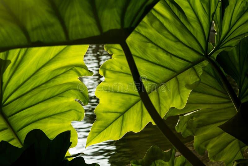 美好的热带叶子背景 库存照片