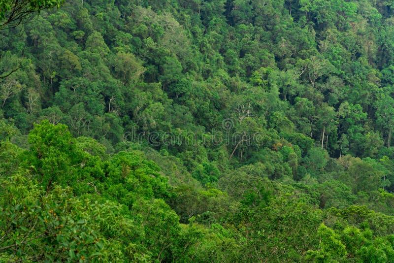 美好的热带森林背景 生态系和健康环境 免版税图库摄影