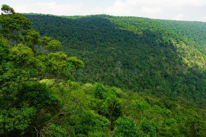 美好的热带森林背景 生态系和健康环境 免版税库存照片