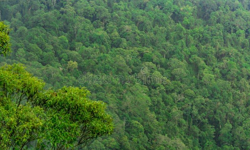 美好的热带森林背景 生态系和健康环境 库存图片