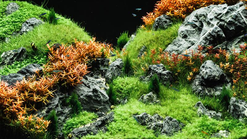 美好的热带水色scape,自然水族馆绿色植物tr 图库摄影