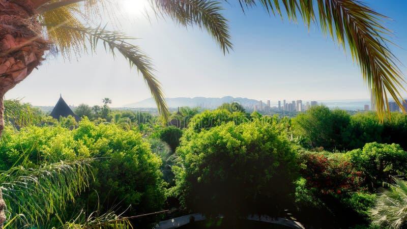美好的热带风景 库存照片