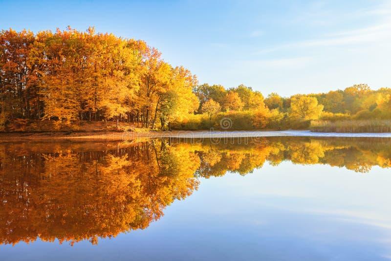 美好的猩红色,在河海岸的黄色,橙树在水中反射 难以相信的好日子 庄严秋天 库存照片