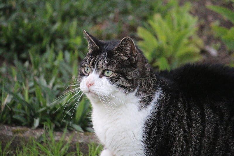 美好的猫头像在庭院里 库存照片