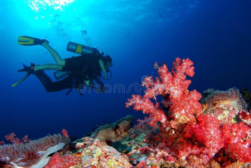 美好的珊瑚是潜水者` s天堂 库存图片