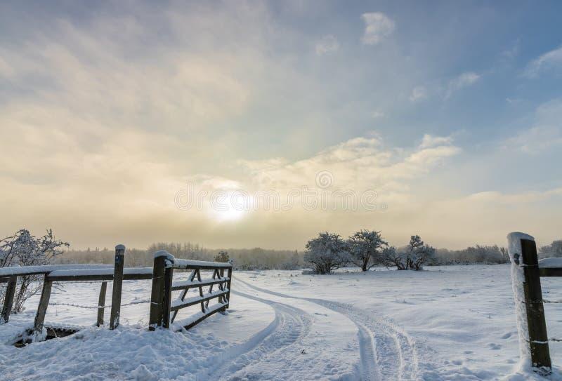 美好的瑞典冬天早晨 库存照片
