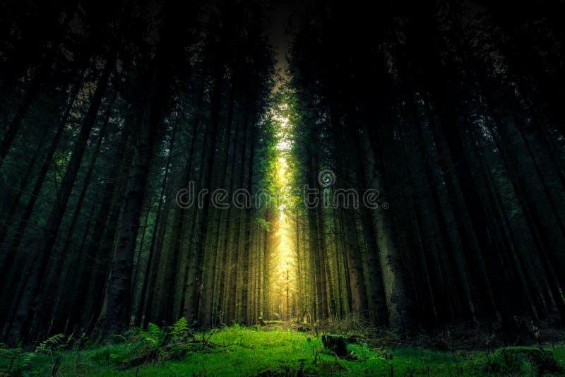 美好的神秘的森林和光束-幻想木头 库存照片