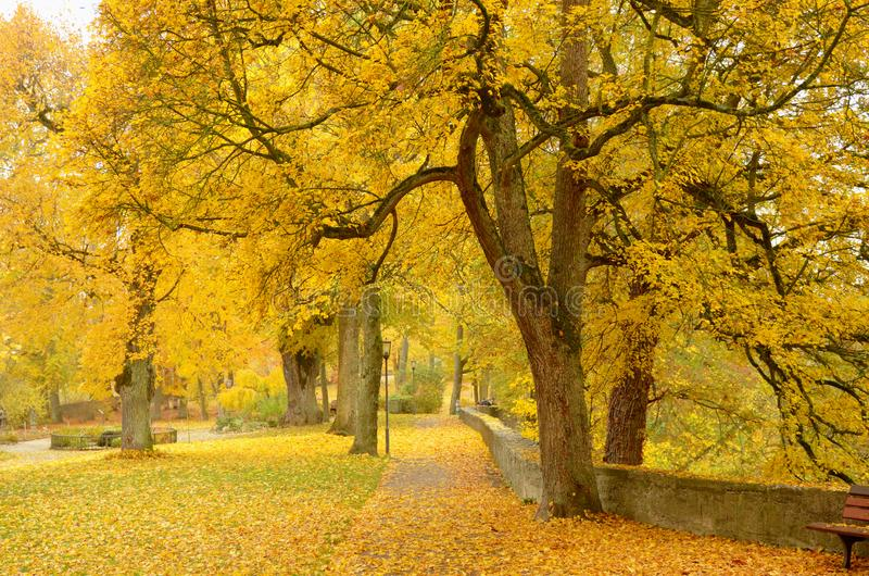 美好的秋天公园风景、黄色树和叶子在秋天 免版税库存图片