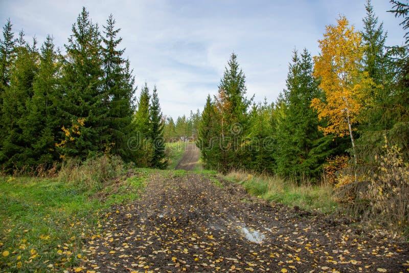 美好的秋天国家风景视图 华美的自然背景 绿色黄色树和越野 免版税库存图片