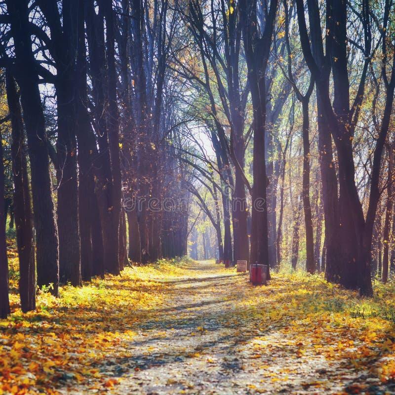 美好的秋天在森林自然阳光背景中 库存图片
