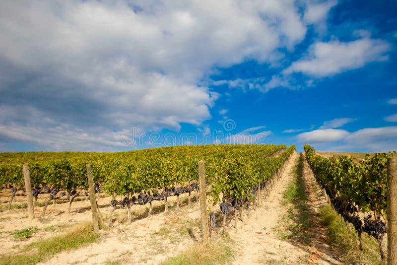 美好的秋天托斯卡纳葡萄园视图 免版税库存图片