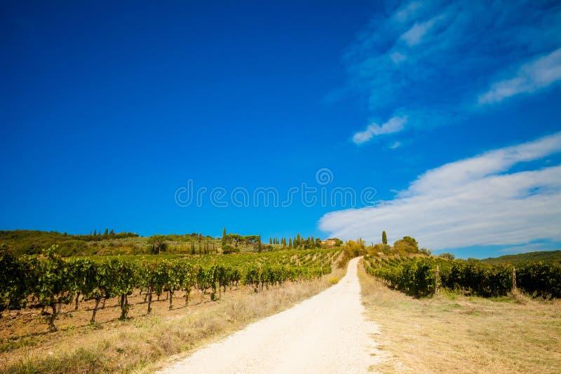 美好的秋天托斯卡纳葡萄园视图 免版税图库摄影