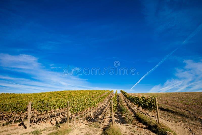 美好的秋天托斯卡纳葡萄园视图 库存照片
