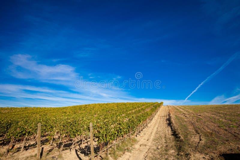 美好的秋天托斯卡纳葡萄园视图 库存图片
