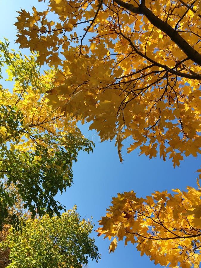 美好的秋天片刻,好日子 免版税图库摄影