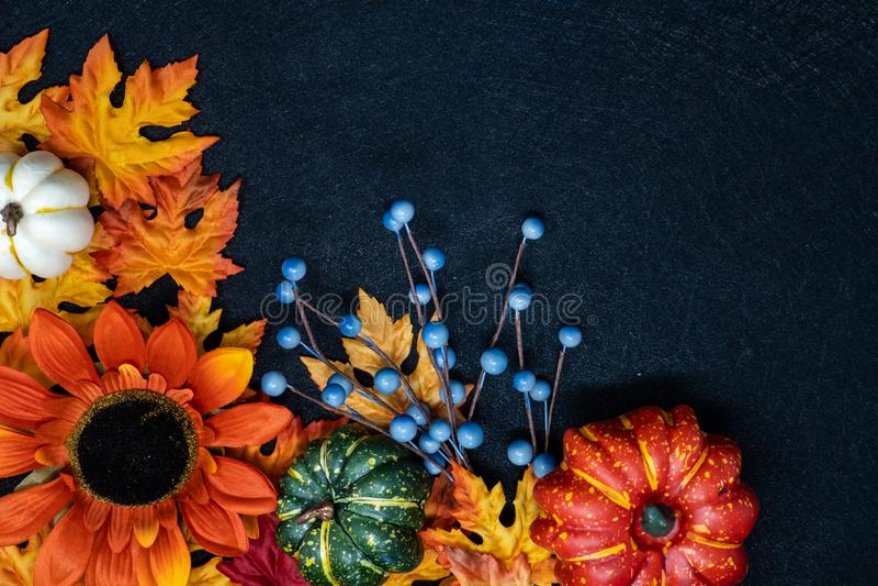 美好的秋天秋天装饰场面和安排 与副本空间的黑背景 场面包括南瓜,向日葵 库存图片
